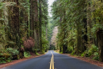 Drury Highway